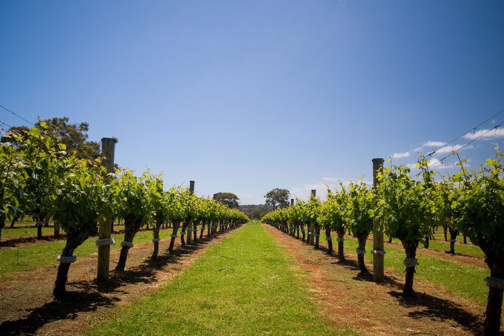 romantic getaways in australia hunter valley nsw