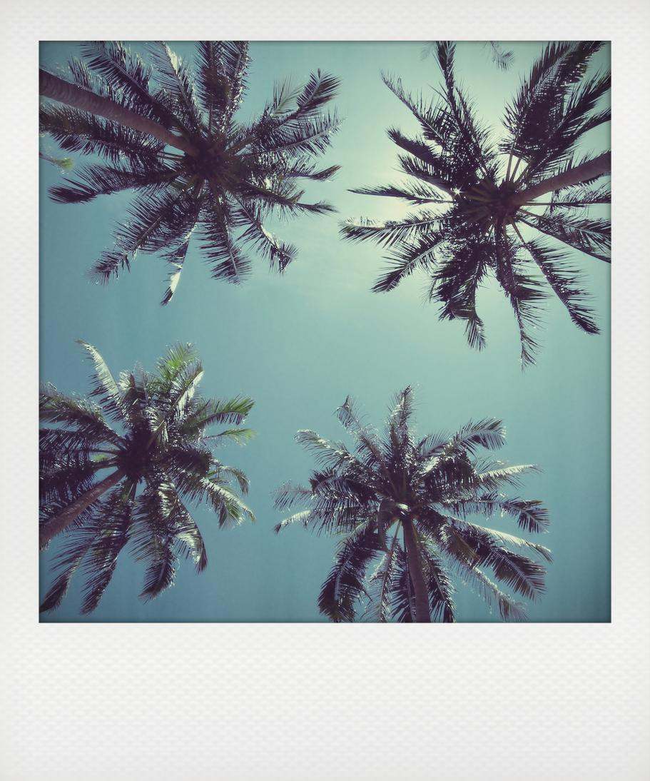 thailand palm trees polaroid