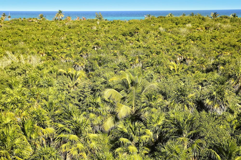 wildlife-tulum-vegetation copy