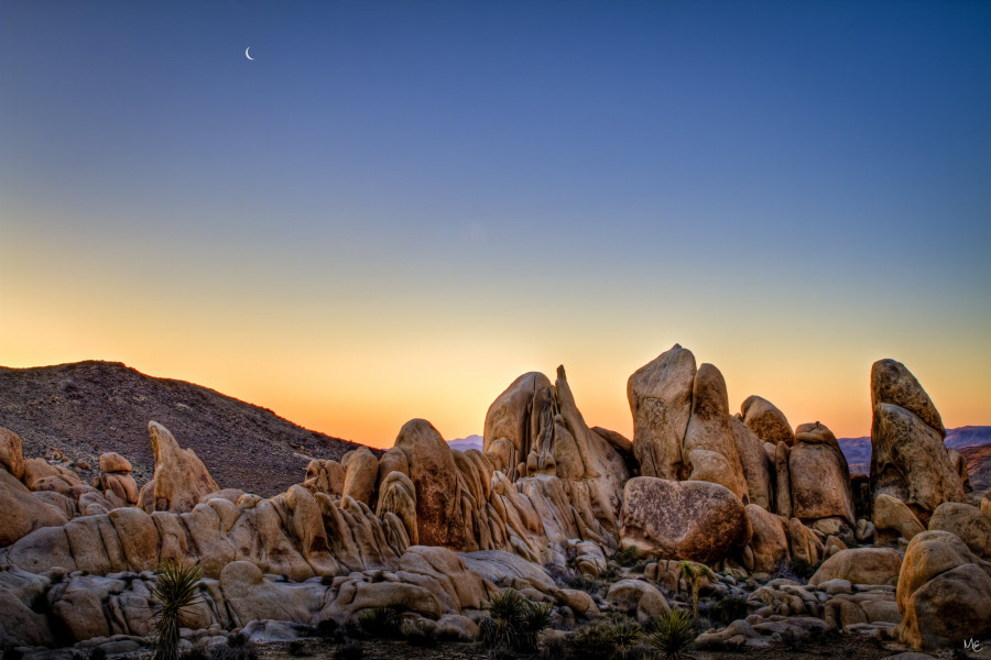 joshua tree national park at night 3
