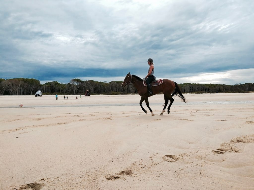 sunshine-coast-horse-riding-noosa-horses
