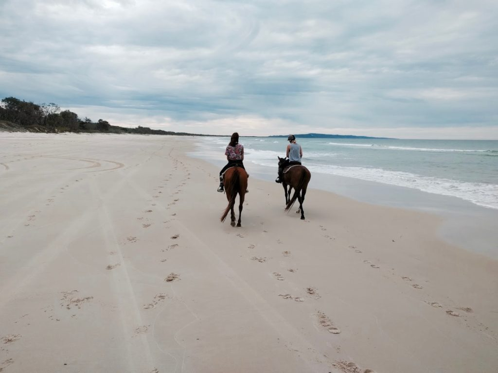 sunshine-coast-horse-riding-noosa-horses-2