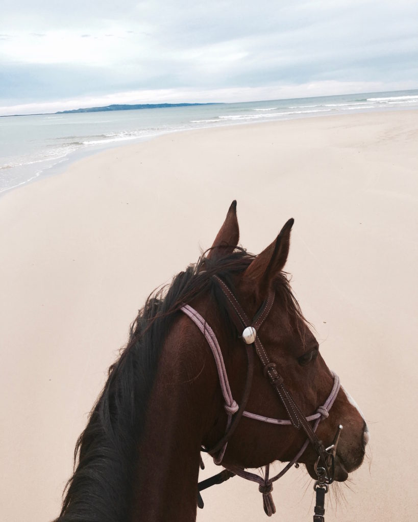 sunshine-coast-horse-riding-noosa-horses-5